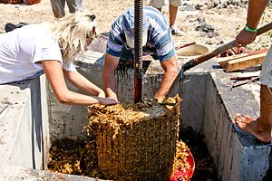 Pomace brandy - White grape pomace being removed from a basket press.