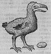 Drawing of a Dodo next to a large gizzard stone