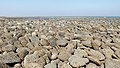 Coral, Chhera Island (03).jpg