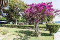 Corfu, Greece - panoramio (66).jpg