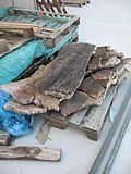 Cork industry a sardignia 13.jpg