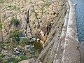 Cortina Presa chica de San Marcos - panoramio.jpg