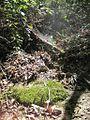 Craighead Forest Park 2011-10-02 Jonesboro AR 004.jpg