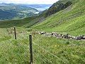 Creag Dhubh above Glen Shira - geograph.org.uk - 479218.jpg