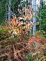 Creech Woods - geograph.org.uk - 1025140.jpg