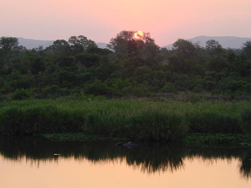 File:Crocodile river Kruger Park03.JPG