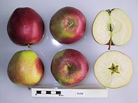 Cross section of Elize, National Fruit Collection (acc. 1987-042).jpg