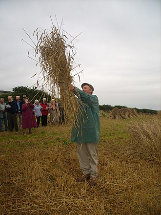 Crying the Neck - 'Crying The Neck' at St Columb Major (2008).
