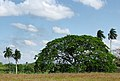 Cuba - panoramio (1).jpg