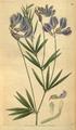Curtis's Botanical Magazine, Plate 3117 (Volume 58, 1831).png