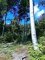 Czerwony szlak z Sulistrowic na Ślężę - panoramio.jpg