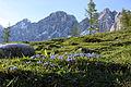 Dachstein südwand2142.JPG