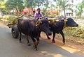 Daily wheeels of Bishnupur.jpg