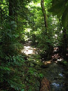 Daintree Rainforest Daintree