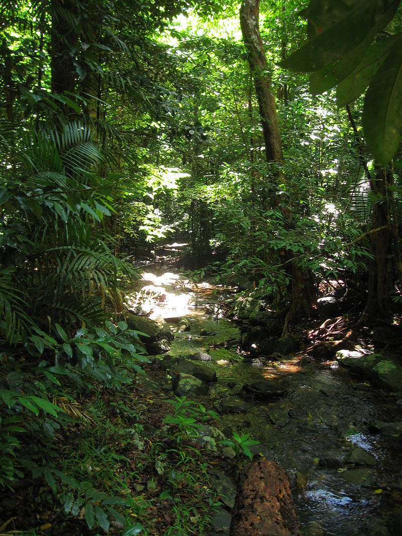 Floresta australiana de Daintree