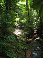 Daintree Rainforest 2.jpg