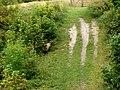 Danebury Ring - Sheep Ambush - geograph.org.uk - 936296.jpg