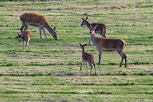Brendon - Image: Deer over Brendon