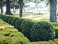 Delicious topiary in Gympie. - panoramio.jpg
