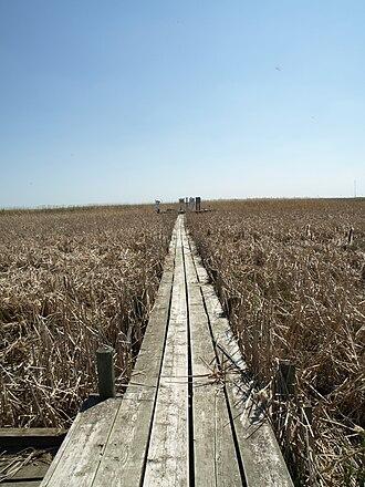 Delta Marsh - Image: Delta Marsh Field Station Manitoba Canada (11)