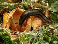 Did you eat that whole mushroom by yourself? (28201440703).jpg