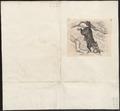 Didelphis cancrivora - 1700-1880 - Print - Iconographia Zoologica - Special Collections University of Amsterdam - UBA01 IZ20300229.tif