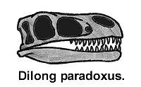 lebka dilonga