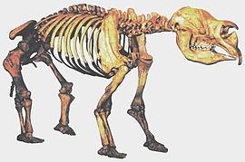MEGAFAUNA: Extinct -  diprotodonts were hippopotamus-sized marsupials.