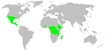 Distribution.zorocratidae.1.png