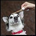 Dogs (8334090516).jpg