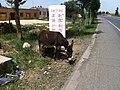 Donkey - panoramio (2).jpg