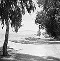 Doorkijk langs bomen en een weg naar de berg Moria (Moré) in Galilea, Bestanddeelnr 255-3194.jpg
