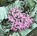 Driftwood Flowers - panoramio.jpg