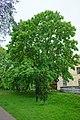 Drzewo w parku - panoramio.jpg