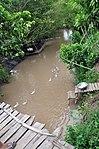 Ducks paddle downstream in Vietnam's Mekong Delta (9150080106).jpg