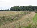 Dunton Fen, Beds - geograph.org.uk - 62361.jpg