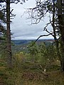East from Birnam Hill - geograph.org.uk - 1506075.jpg