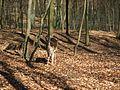 Eberswalde zoo 022.jpg