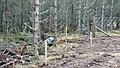 Electric Fence (Glen Lui) on Mar Lodge Estate (15MAR13) (21).jpg