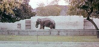 Honolulu Zoo - Elephant at zoo, 1958