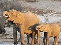 Elephant siblings (29247708987).jpg
