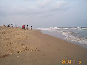 Flora and fauna of Chennai - Facing north on Elliot's Beach in Besant Nagar.