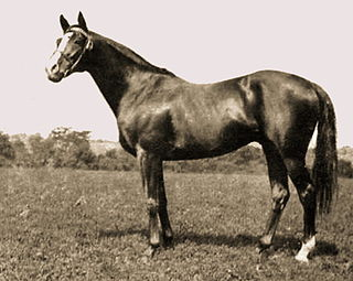 Épinard French-bred Thoroughbred racehorse