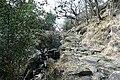 Eskamuckny Glen - geograph.org.uk - 776904.jpg
