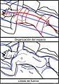 Esquema de Desnudo acostado. Modigliani.jpg