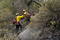 FEMA - 33487 - Bureau of Indian Affairs firefighters working in California.jpg