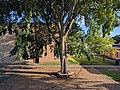 Falcon Heights Elementary tree 1.jpg