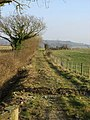 Farm track between fields. - geograph.org.uk - 1113075.jpg