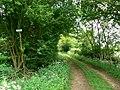 Farm track near Manor Farm, Driffield - geograph.org.uk - 438991.jpg