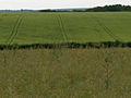 Farmland, Amport - geograph.org.uk - 469982.jpg